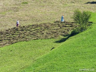 Women farmers raking grass on a mountain slope in the Stubai Valley.