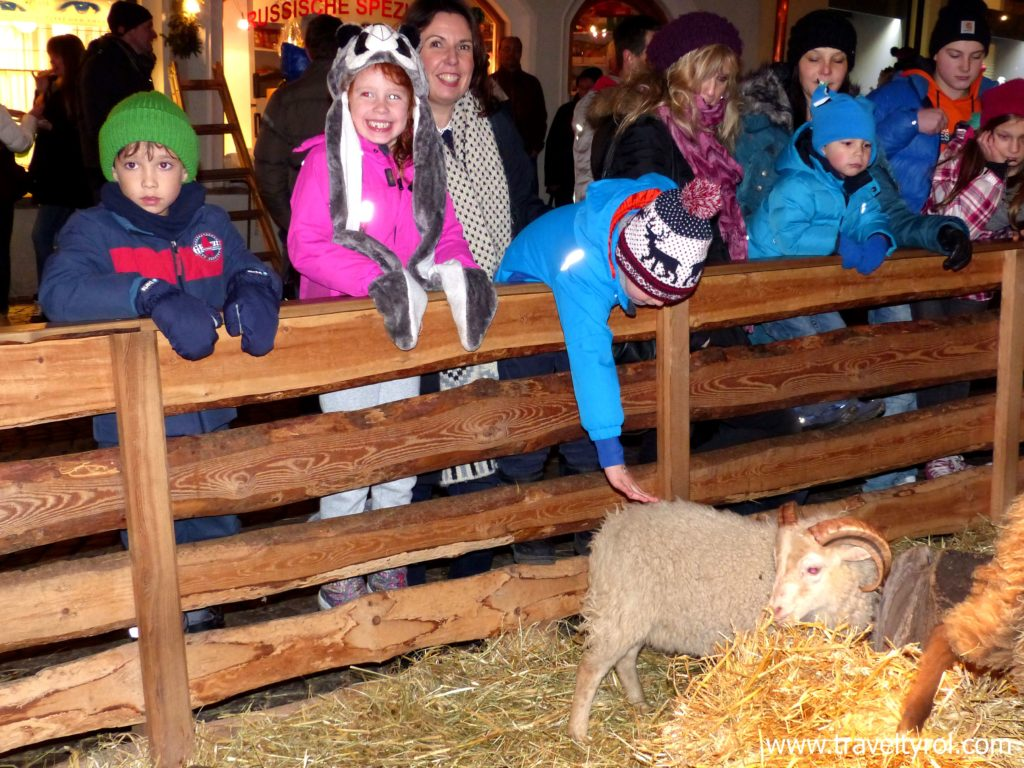 Animal petting zoo Hall in Tirol Christmas market.