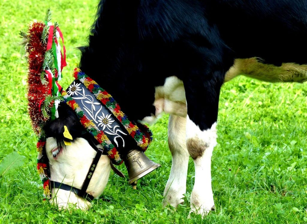 Austrian cow with pretty headdress. © Travel Tyrol