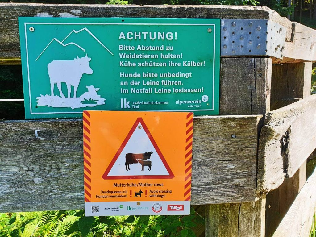 Cow warning sign in the Austrian Alps.